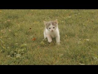 DJ МАНУК ПРЕДСТАВЛЯЕТ  тренировки котят