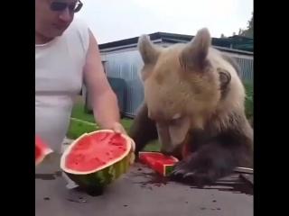 Сёма кушает ягодку - vk.com/bg.garden