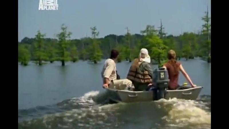Необычные животные Ника Бейкера Та что в болоте живёт