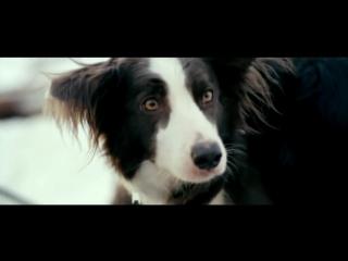 валентин гафт - от чего так предан пёс...