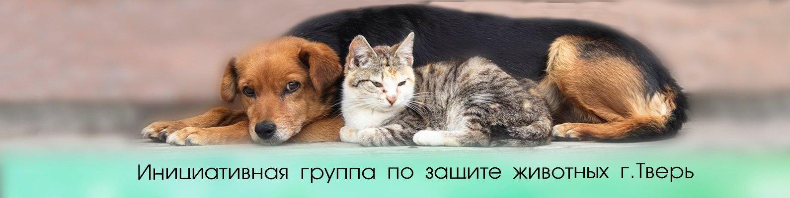 Инициативная группа по защите животных г. Тверь  8b43dc35a3212