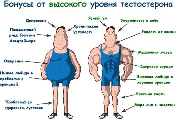 Как хранить тестостерона пропионат