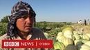 Ўзбеклар ва дунё: Икки ойда тўрт минг доллар ишладим, ёмонмас а? - BBC Uzbek
