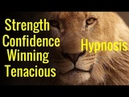 Hypnosis Confidence Tenacious Winning Mindset the Lion the Champion Mind Programming
