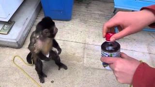 прикол, обезьяна купила сок