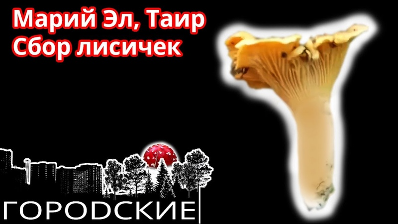 🍄Сбор лисичек в Марий Эл Собираю лисички в Марийской Республике Таир 2019 Рейс в Йошкар Олу