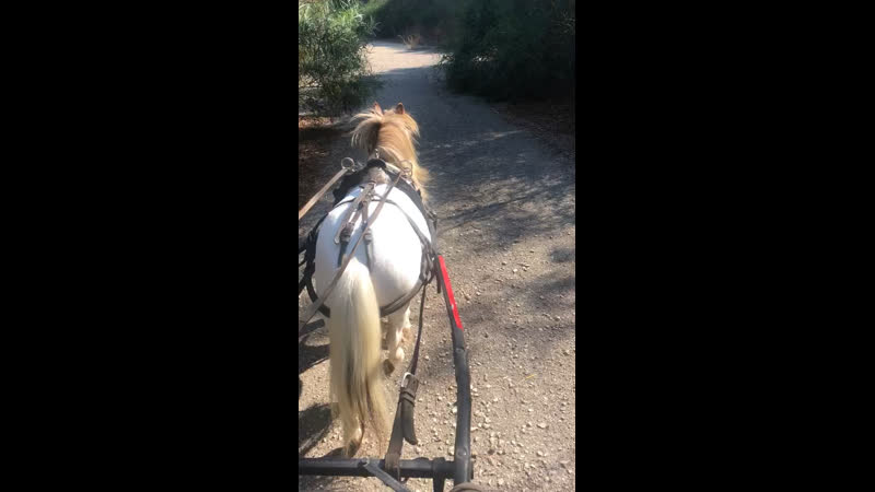 Pony class driving/𝕮𝖍𝖗𝖎𝖘𝖙𝖔𝖘