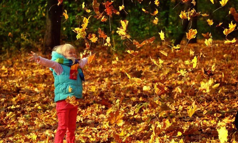 Явления природы осенью картинки для детей