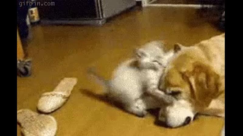 Kitten vs. dog