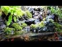 三層瀑布生態缸