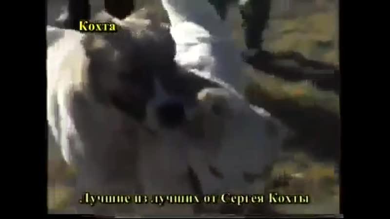 Арлан Белый - Малыш Киргизский