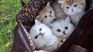 Fluffy Kittens First Time Outdoors