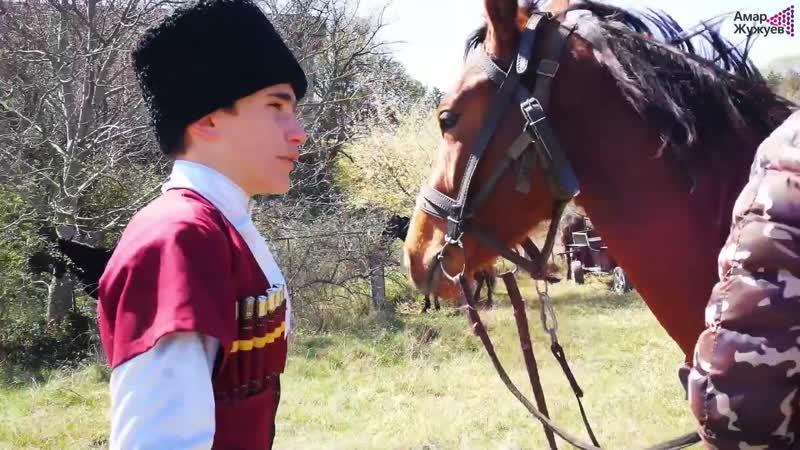 Лошадь кабардинской породы - черкесские лошади
