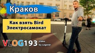 Как взять самокат Bird в Кракове. Нашли смалец в польском магазине | Глазами туриста
