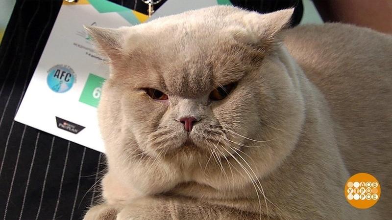 Роскошные кошки! Доброе утро. Фрагмент выпуска от09.12.2019
