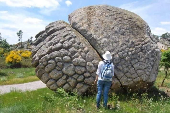 Удивительно! Каменные Животные