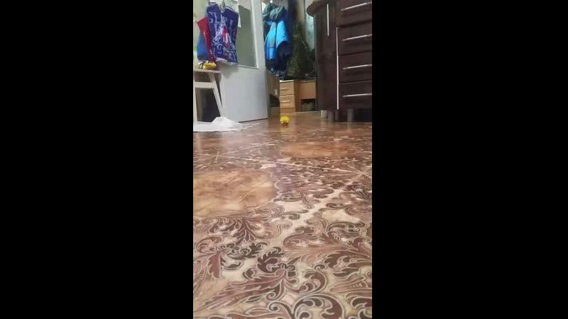 прыгает заяц