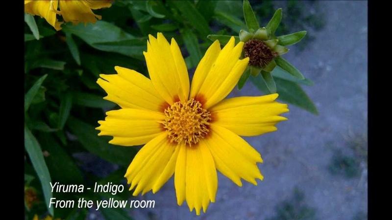 Yiruma - Indigo | From the yellow room