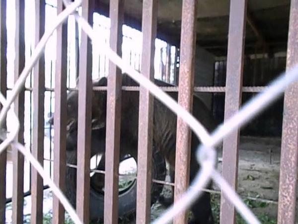 Зоопарк в д Ашево Бежаницкий район