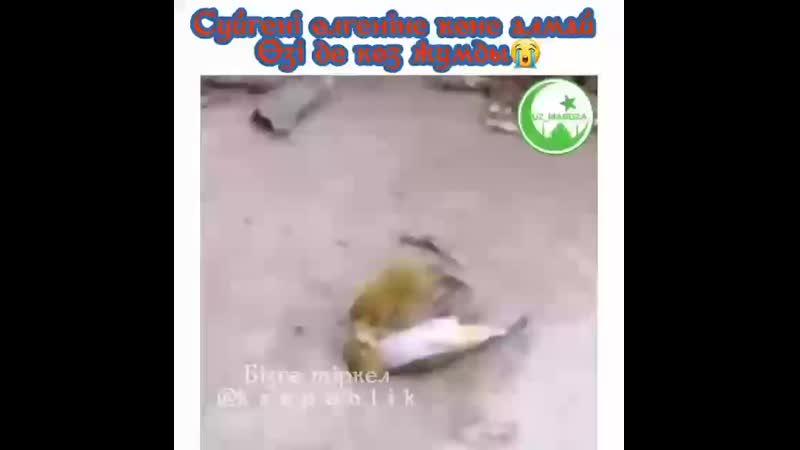 шынайы махаббат деп осыны айт ❤