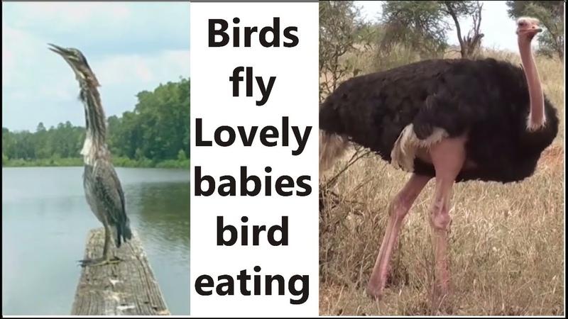 Sh Strange Birds and lovely bird babies movement eating fish beautiful birdy lyrics Strange House