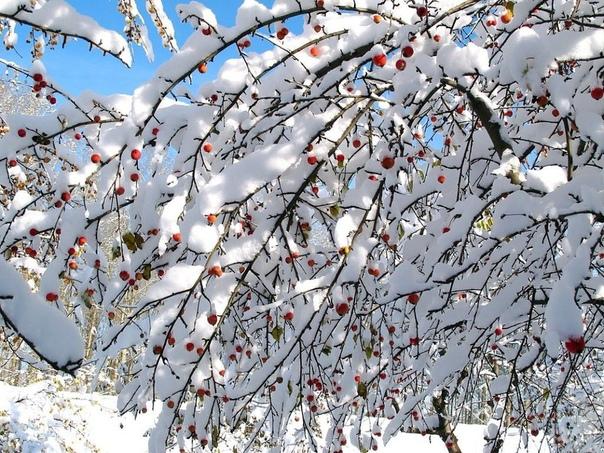 Защищаем деревья на зиму В литературе обычно в качестве укрывных обвязочных материалов, защищающих плодовые деревья от отрицательного воздействия низких температур и повреждений грызунами,