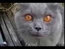 Говорящие коты / приколы /пьяные животные /смешные животные /коты собаки / Лучшая подборка