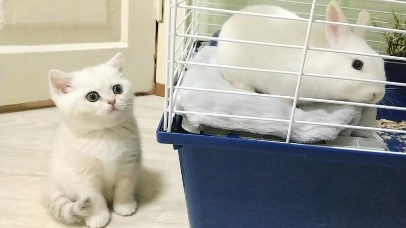 Coco kitten came to visit the Neytiri bunny Soo funny Soo cute