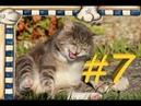 СМЕШНЫЕ КОТЫ Смешное видео про кошек, видео нарезка приколов 2021! Shkiper Smile ВЫПУСК 7