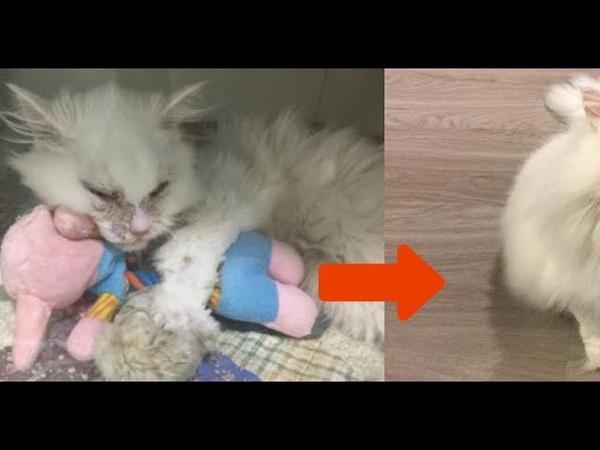Приют отговаривал ее брать умирающего кота Через 5 дней его не узнать