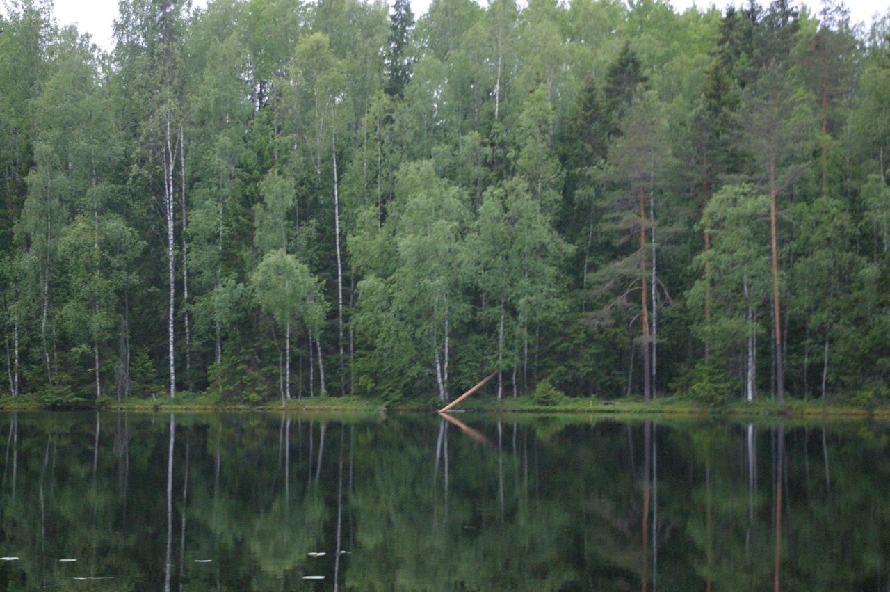 Озеро Глухое (Белоостров). Прозрачное, чистое и красивое. Вечерняя прогулка в пятницу