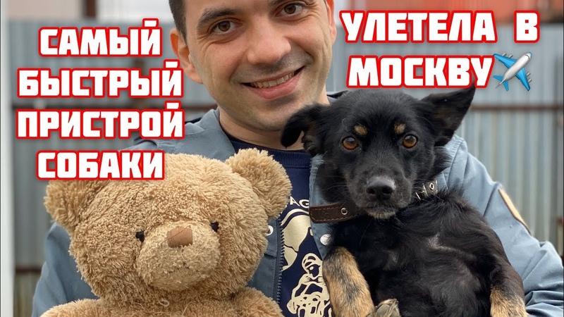 Бездомные собаки оптом в семьи. Пристроили троих сразу.
