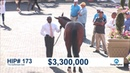 The Gulfstream Sale 2019 Curlin Colt Sells for $3 65 Million Hip 173
