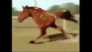 Таракан Жего Пипонстр Hi  захватил Анархо лошадь Суцадрик которая с 2 ногами !!!!! !!! ! !!!!!