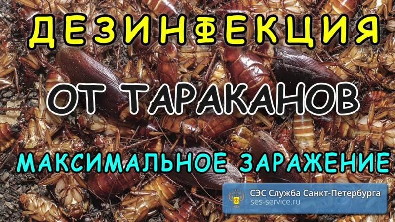 Уничтожение тараканов в квартире Максимальное заражение кухни тараканами