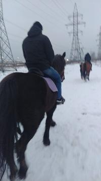 Немного о ковке лошадей и для чего она нужна, вкратце
