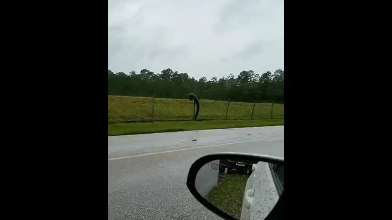 Антикрокодятельный забор во Флориде