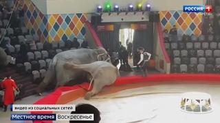 В Казанском цирке раскрыли причину драки слоних во время выступления