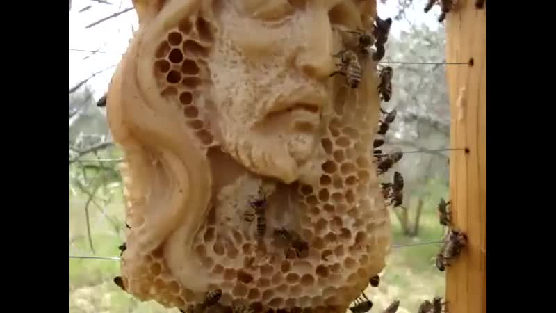 Пчелы - реставраторы