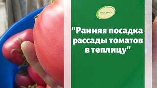 🍅Ранняя посадка томатов в теплицу в апреле. Подготовка гряд и полива. Марценюк Надежда.