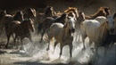 We are free - Hans zimmer ~ music (FOR HORSES AND NATURE LOVERS )