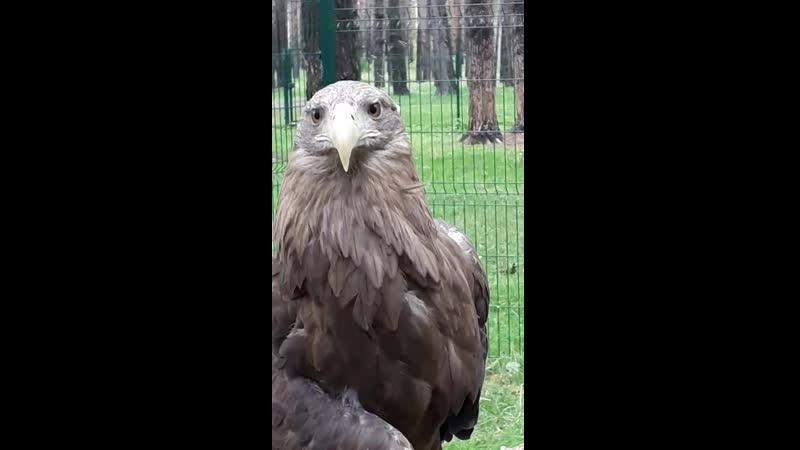 Орлан. Эко парк Тайга.