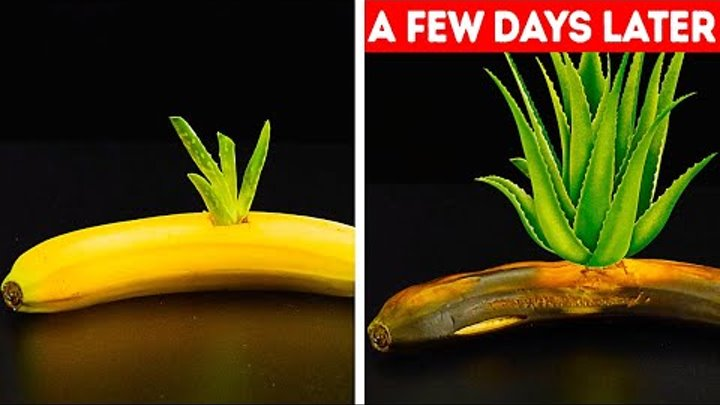 27 GARDENING HACKS YOU'LL WANT TO KNOW