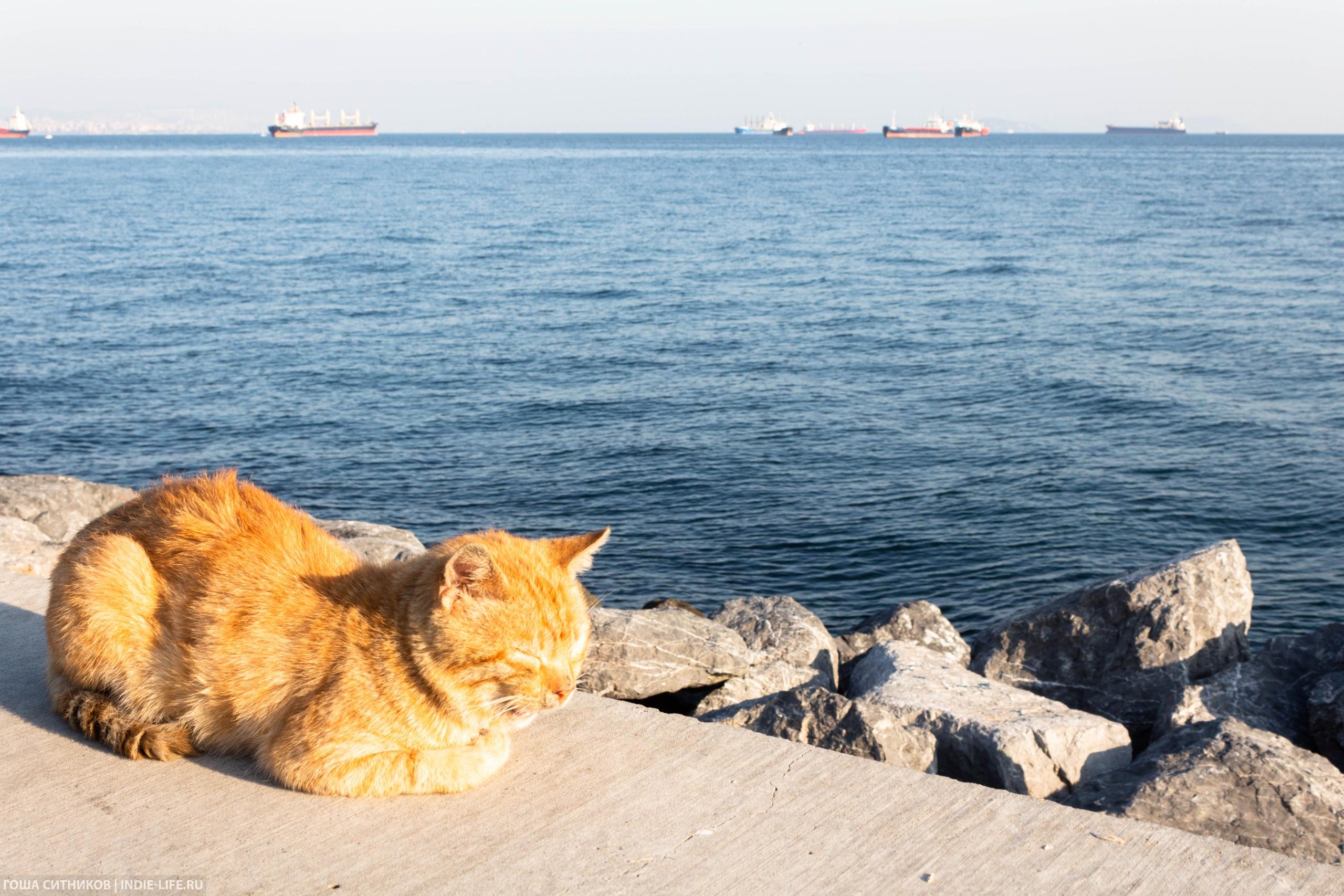 Рыжий кот на Мраморном море