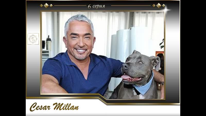 6 серия Сезар Миллан Переводчик с собачьего /Hank Paris