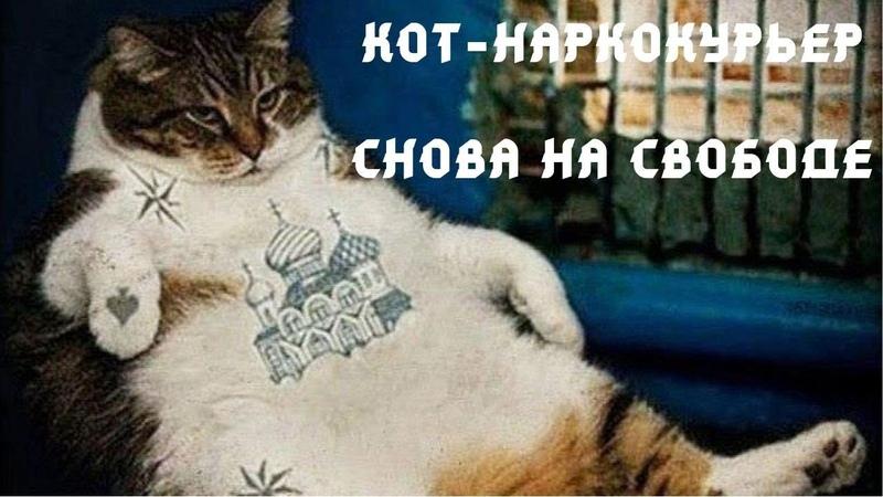 Кот наркокурьер сбежал от российских следователей не дождавшись суда (Плохие Новости)