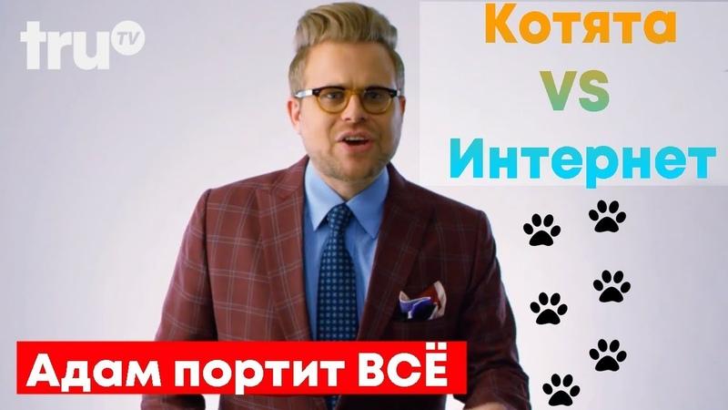Адам портит всё Почему котята поработили интернет Русская озвучка Крик Студио
