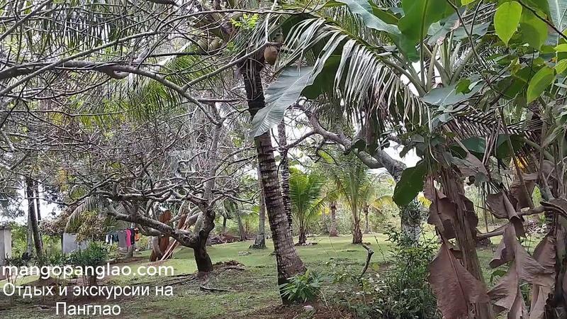 ФИЛИППИНЫ ПАНГЛАО Смотрим участки и посещаем красивые места на Панглао Жизнь на Филиппинах