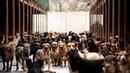Каждая собака документальный фильм о приютских собаках