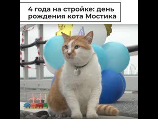 День рождения кота Мостика